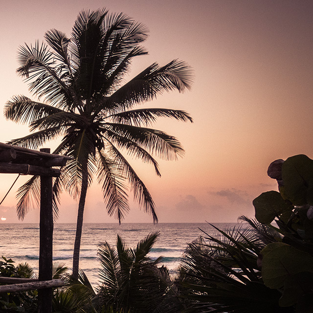 Pan american nights beach palm trees for Design hotels tm